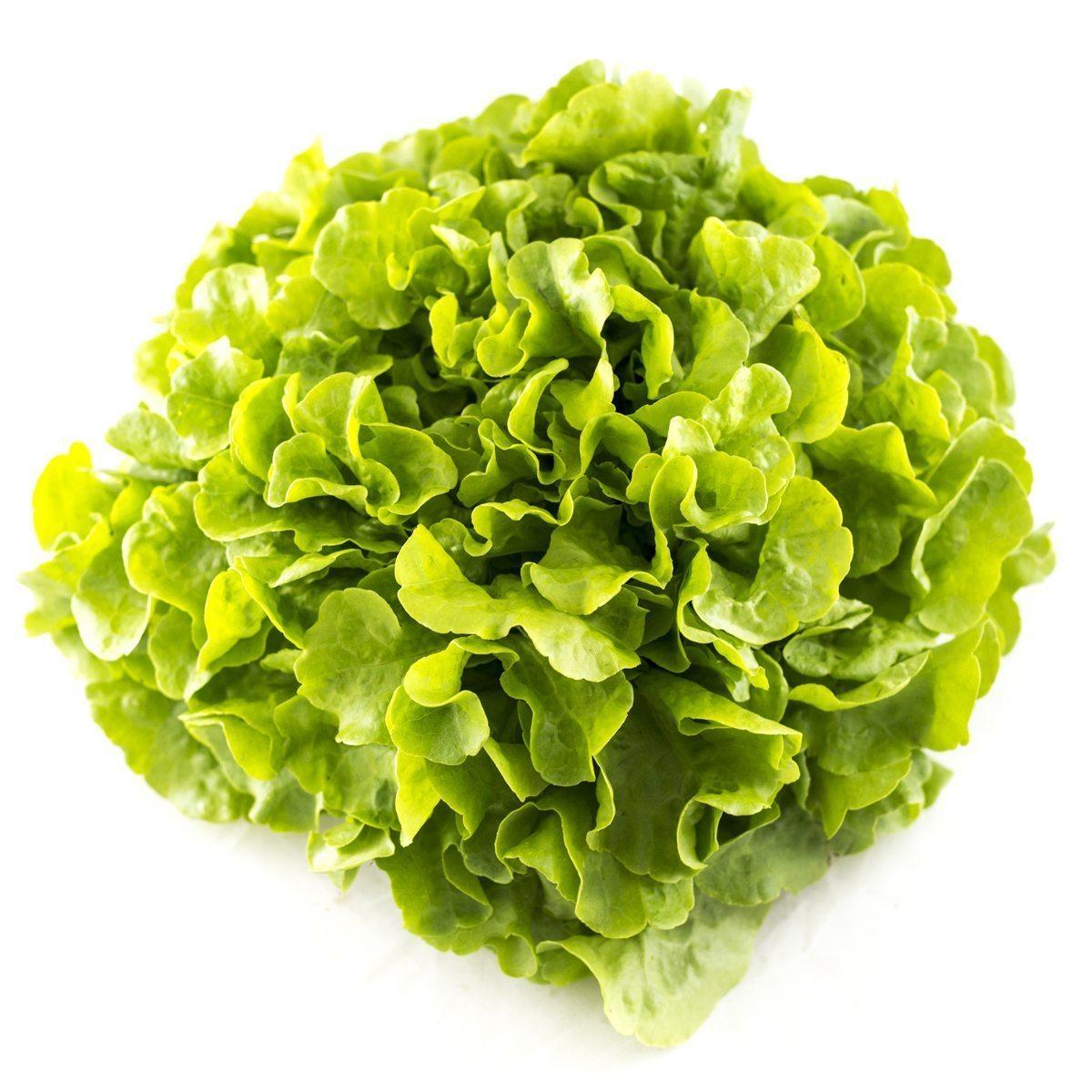 Zelena salata Puterica (1kom)